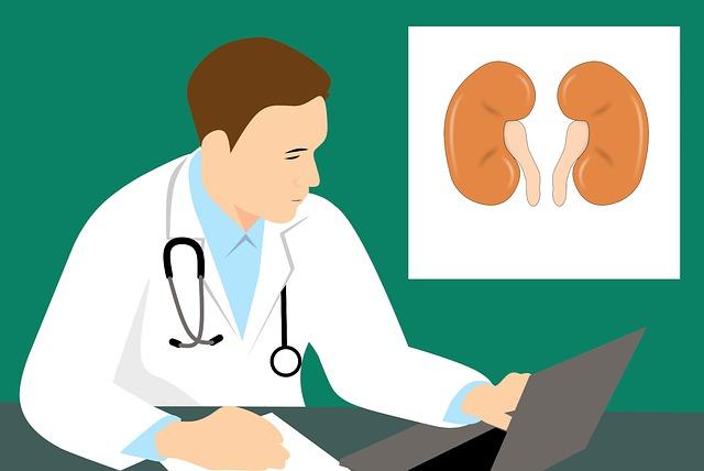 lékař a ledviny
